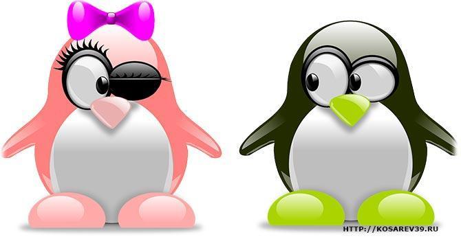 любовь пингвинов