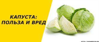 Польза и вред белокочанной капусты