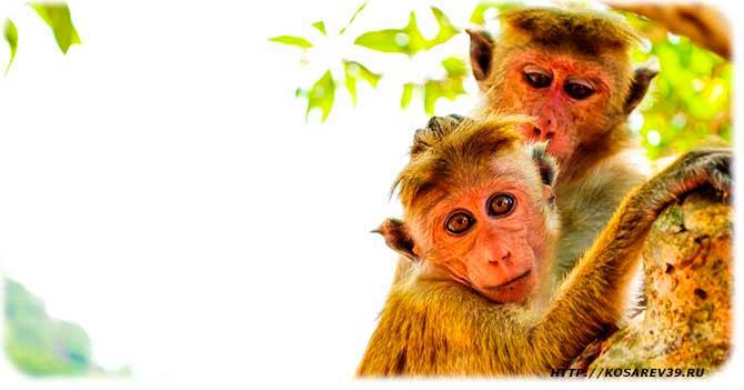Гороскоп для года обезьяны