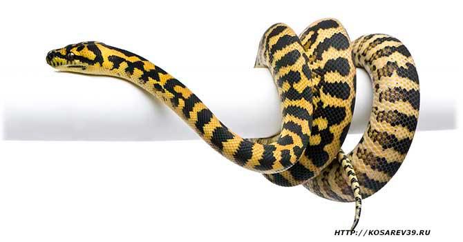 Гороскоп для года змеи