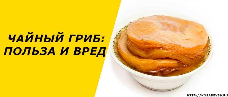 Чайный гриб: польза и вред