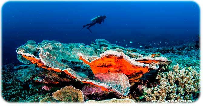Добыча морской капусты