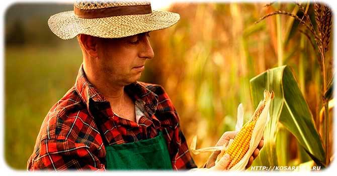 Польза кукурузы для женщин и беременных