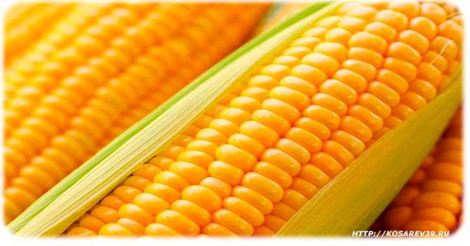 Польза употребления кукурузы