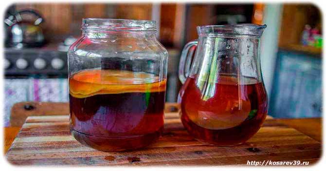 Вред и противопоказания чайного гриба