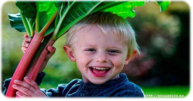 Польза ревеня для детей
