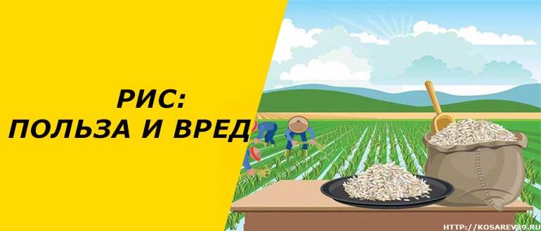 Рис: польза и вред
