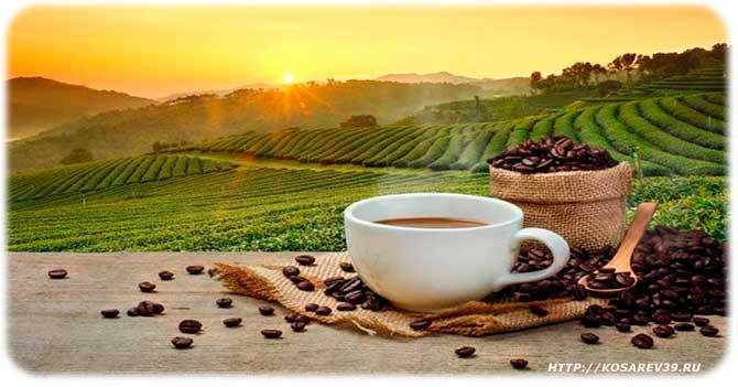 Из чего состоит кофе