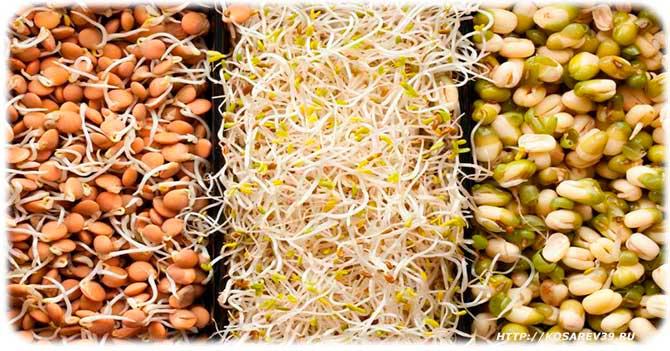 Состав биогенных продуктов