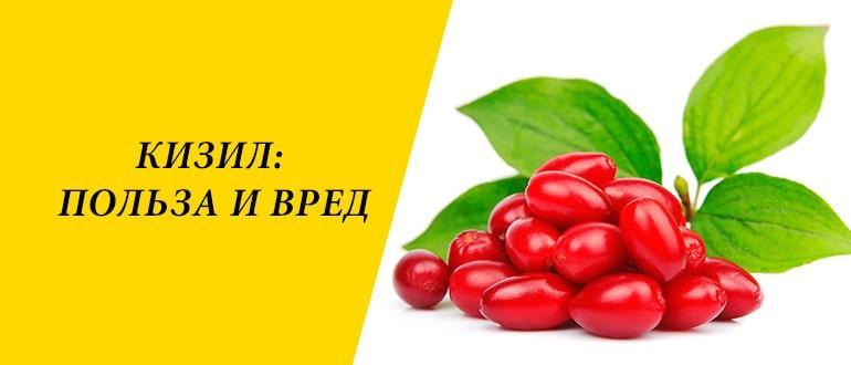 Полезные свойства и противопоказания ягоды кизил