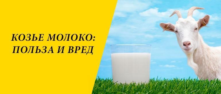 Лечебные свойства козьего молока