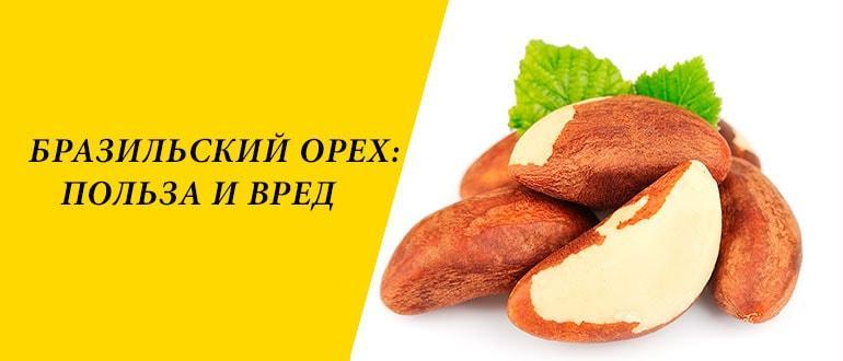 Бразильский орех: где растет, химический состав и полезные свойства. Масло бразильского ореха. Бразильский орех в косметологии