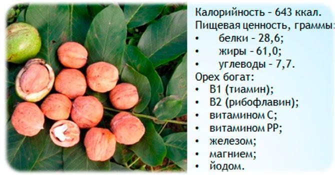 Состав маньчжурского ореха