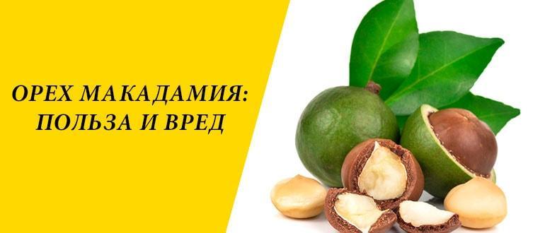 """Орех макадамия: как и где растет круглый """"орех с прорезью"""""""