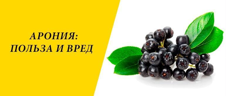 Полезность черноплодной рябины