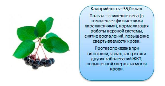 Фото рябины черноплодной