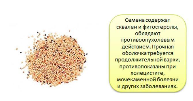 Фото семян амаранта