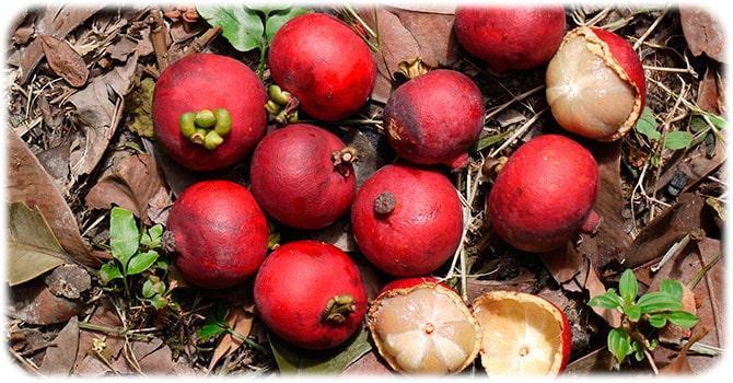 Вред плодов кокума