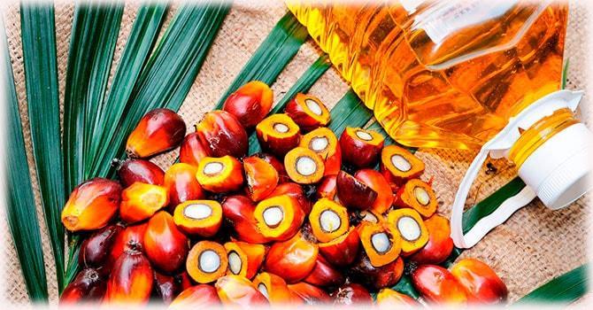 Пальмовое масло в бутыле