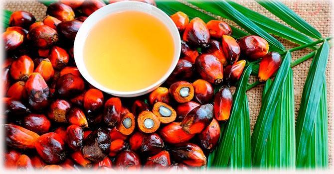 Свойства пальмоядрового масла