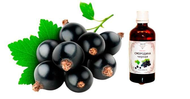 Состав масла черной смородины
